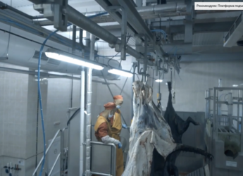 Оборудование убоя скота | Линии убоя скота
